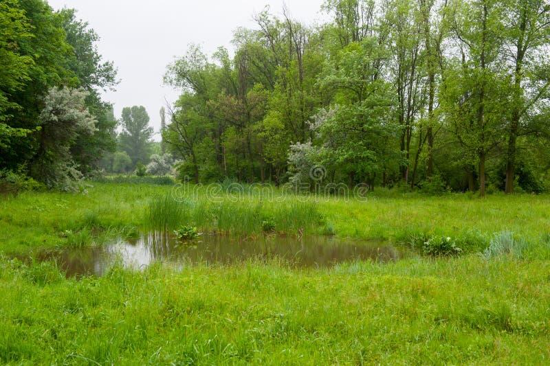 verão Forest Landscape imagens de stock