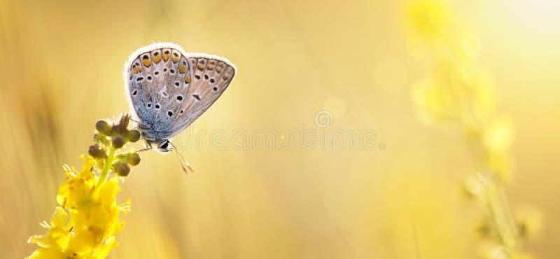 verão, fundo do verão - borboleta que senta-se em um fl amarelo foto de stock