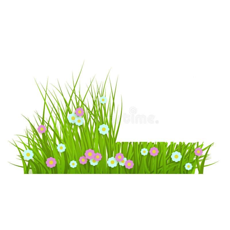 verão, grama verde luxúria floral da mola e beira do gramado com margaridas, antes e depois da sega ilustração do vetor