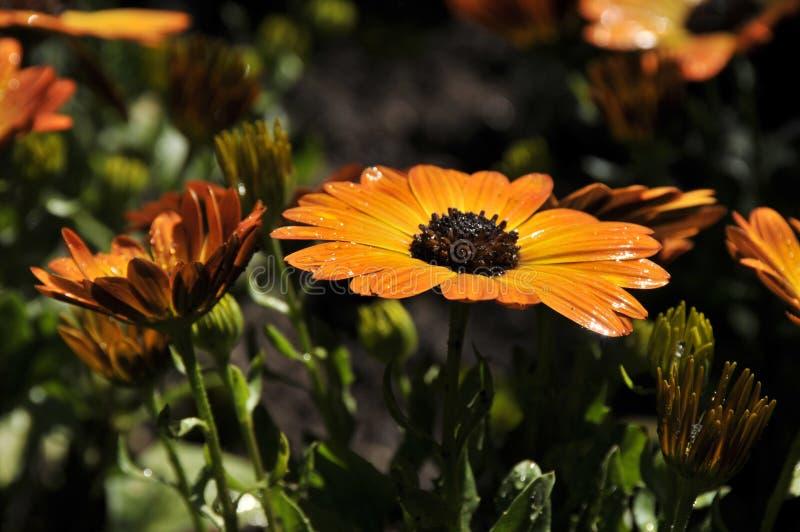 verão na flor completa fotografia de stock royalty free