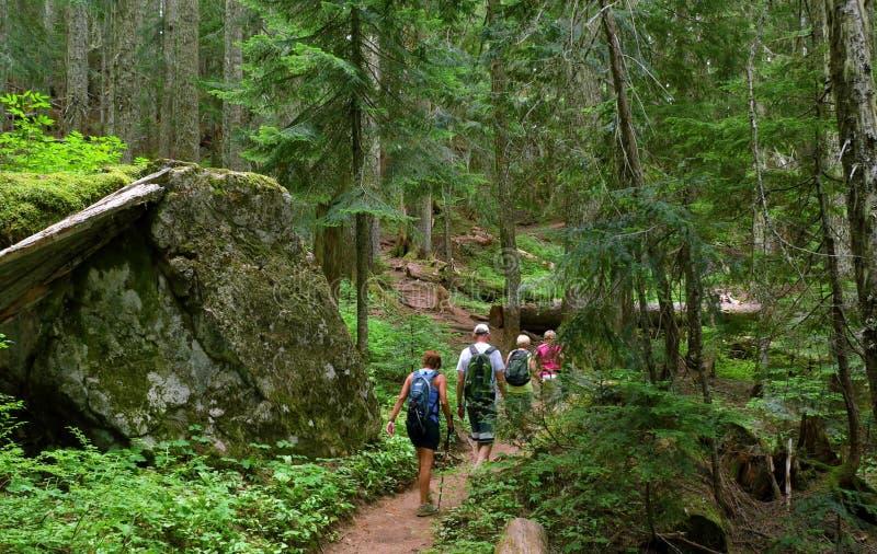 verão na montagem Rainier National Park, Washington fotografia de stock royalty free