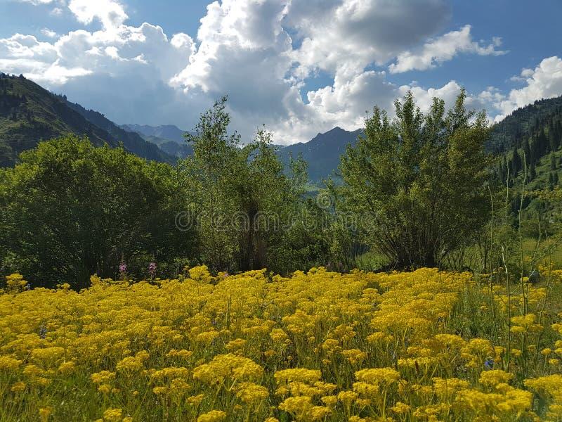 verão nas montanhas foto de stock