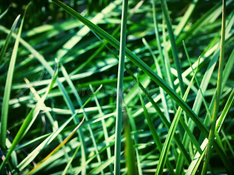 Verão verde imagens de stock royalty free