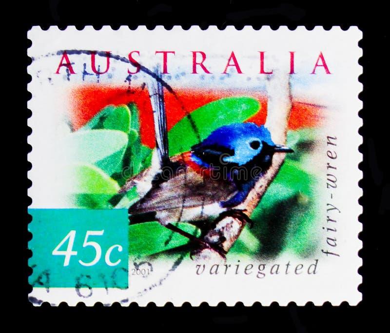 Verändertes lamberti Fairywren Malurus, Beschaffenheit von Australien - verlassen Sie Vögel serie, circa 2001 lizenzfreies stockbild