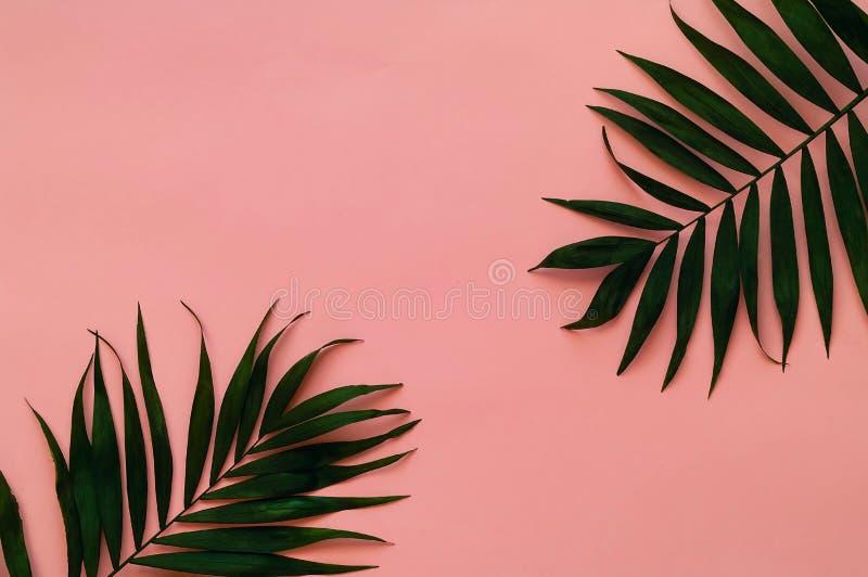 Veränderungen von tropischen Palmblättern auf heller Beschaffenheit Kreative tropische Blätter auf rosa Hintergrund, Kopienraum,  lizenzfreie stockbilder