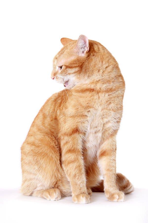 Verärgerte Katze stockbilder