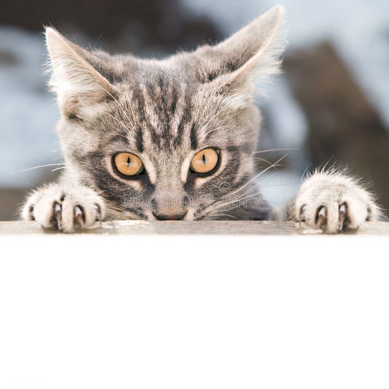Verärgerte Katze schaut in der Front lizenzfreie stockfotografie