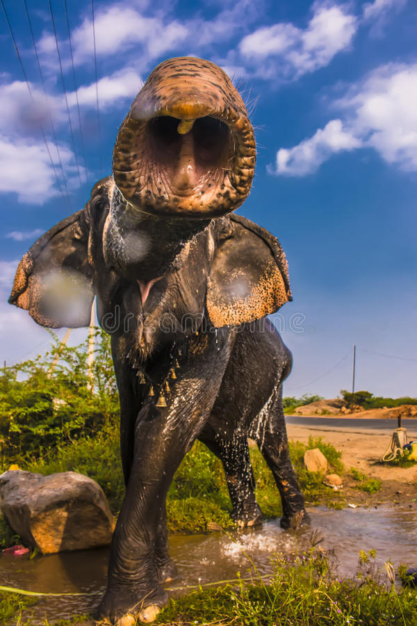 Verärgerter Elefant lizenzfreies stockbild