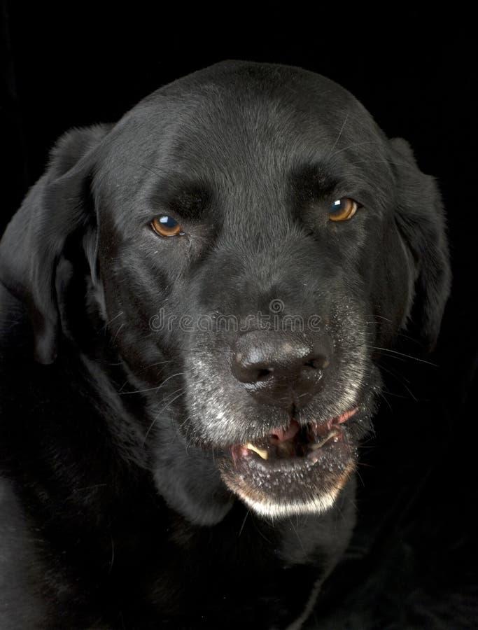 Verärgerter Hund lizenzfreie stockbilder