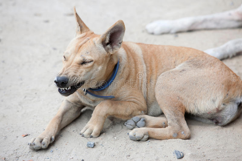 Verärgerter Hund mit den blanken Zähnen lizenzfreies stockbild