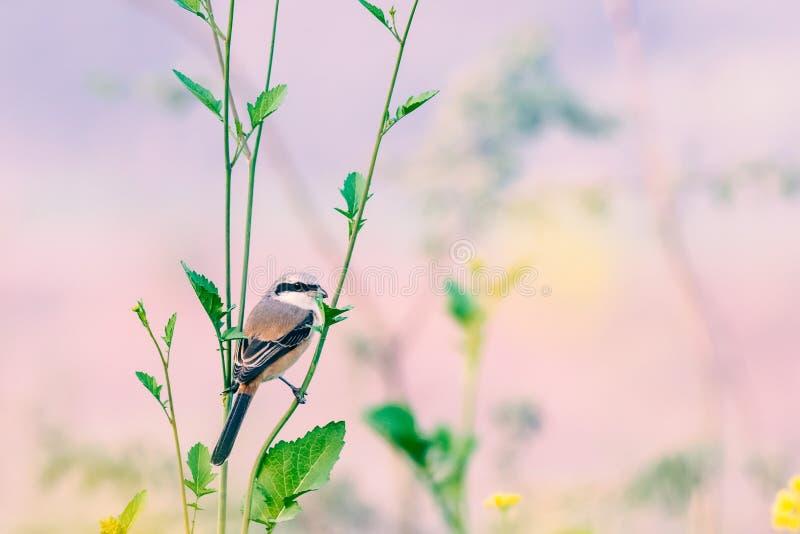 Verärgerter Vogel auf Riemen lizenzfreies stockbild