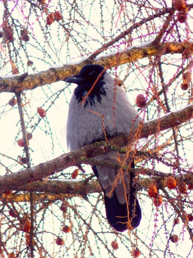 Verärgertes bird lizenzfreie stockbilder