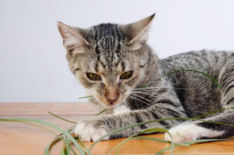 Verärgertes Kätzchen stockbild