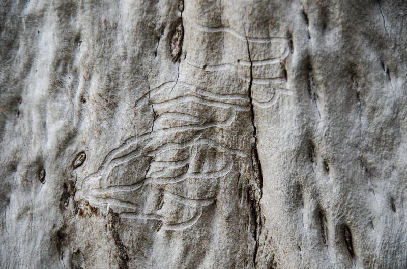 Ver de bois sur l'arbre images stock