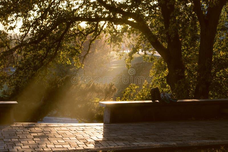 ver?o ou parque adiantado do outono no por do sol imagem de stock royalty free