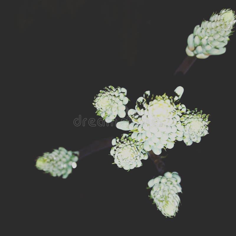 Vera aloesu kwiaty zdjęcia stock