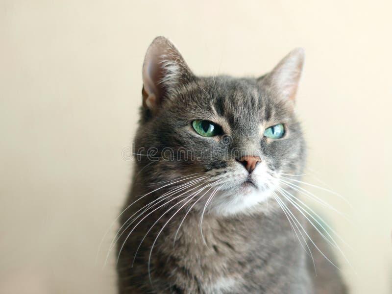 Verachtingemotie in kattenogen stock fotografie