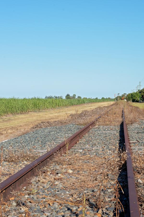 Veraltete Bahngleise überwältigt mit Unkräutern lizenzfreies stockfoto