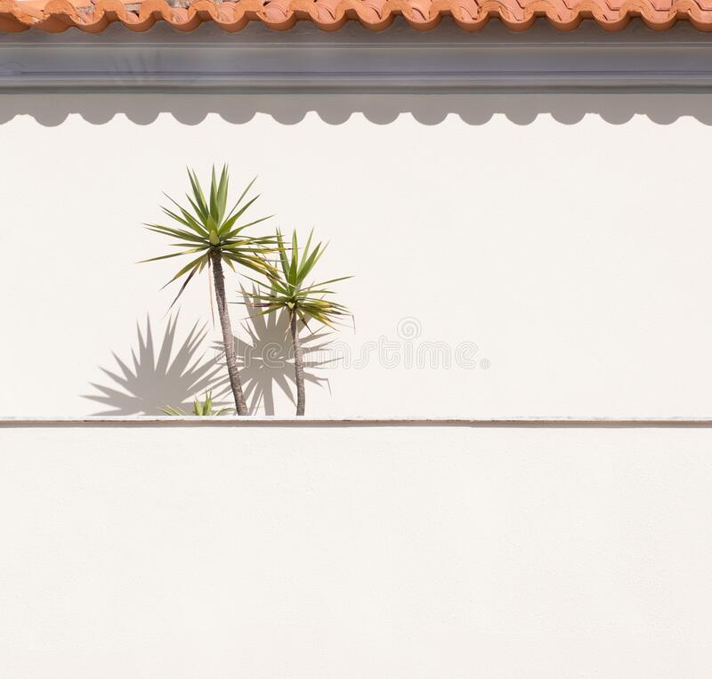 Free Veranda In Rural Portugal. Palm Trees And Orange Roof Tiles Casting Shadows On Wall Royalty Free Stock Photography - 194840527