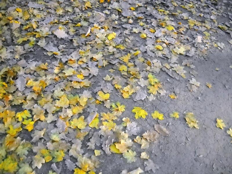 Verandering van seizoenen door bosweg stock afbeelding