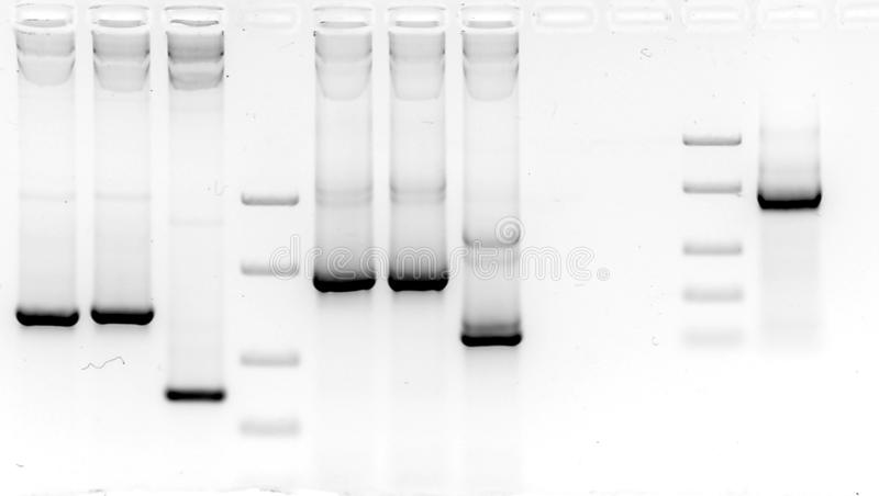 Veranderingsonderzoek in agarose gel royalty-vrije stock foto