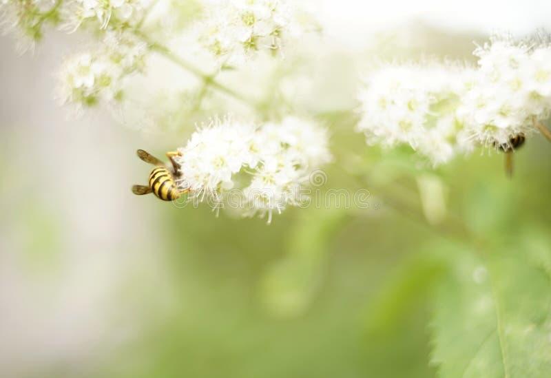 verano al aire libre del jardín de la falta de definición del fondo del bokeh de la hoja del verde del pétalo del insecto del pri imagen de archivo libre de regalías