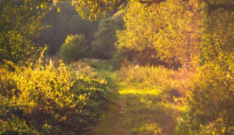 verano augusto de la naturaleza imagenes de archivo