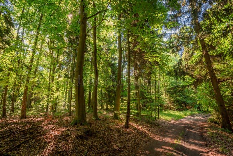 Verano colorido en el bosque en la salida del sol, Polonia fotos de archivo libres de regalías