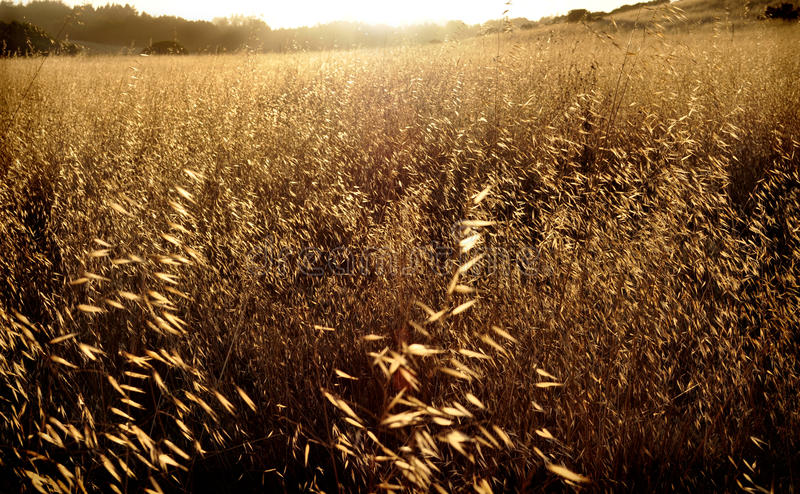 Verano de California imagenes de archivo
