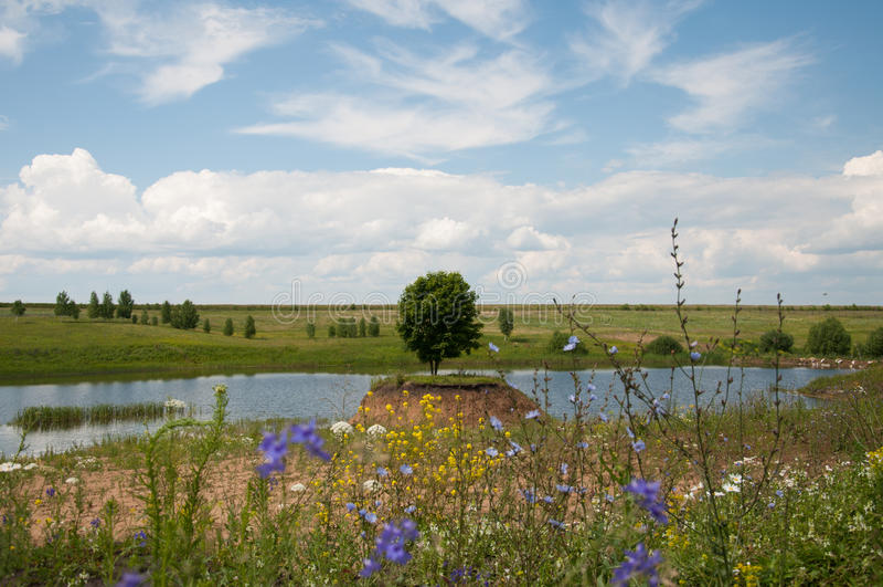 Verano de la naturaleza en el árbol ruso, hermoso fotografía de archivo libre de regalías