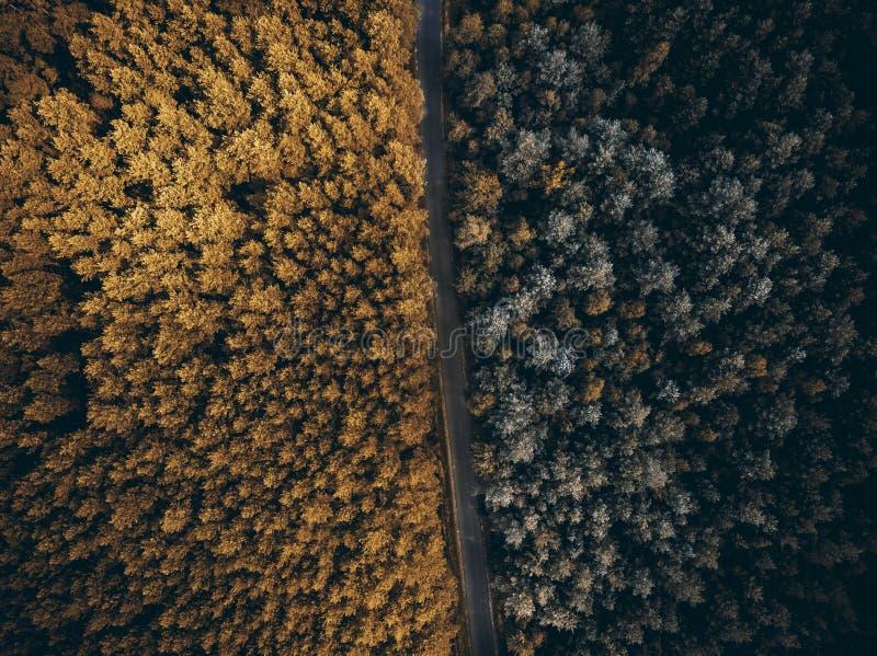 Verano de la transición de la estación a la caída del otoño, top del bosque abajo imágenes de archivo libres de regalías