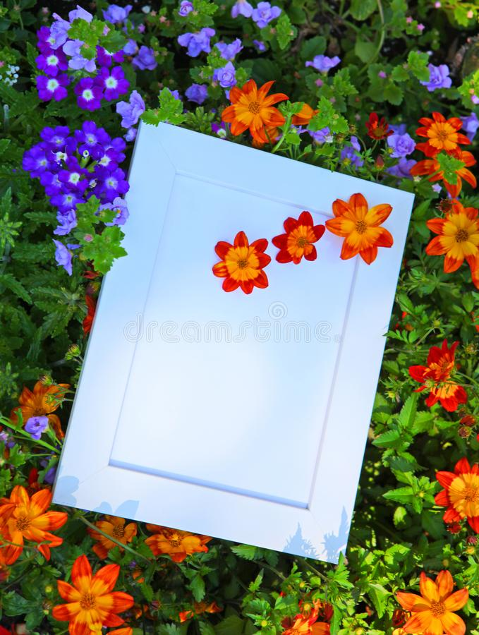 Verano del jardín de flores del capítulo de la foto foto de archivo