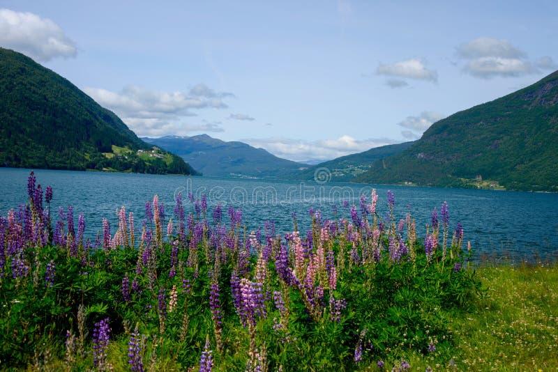 Verano en los fiordos de Noruega fotos de archivo libres de regalías