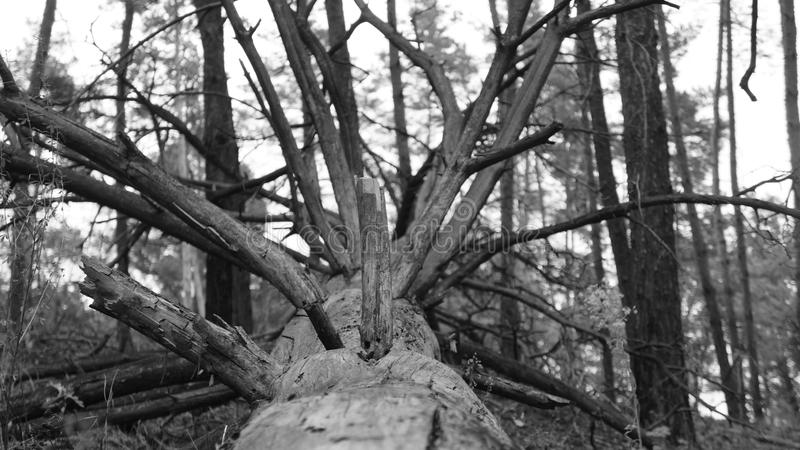 Verano Forrest foto de archivo