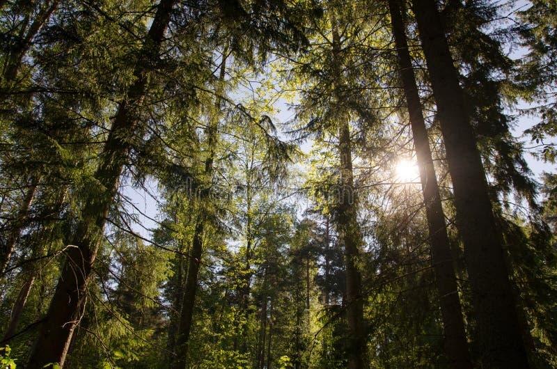 Verano Forrest imagen de archivo