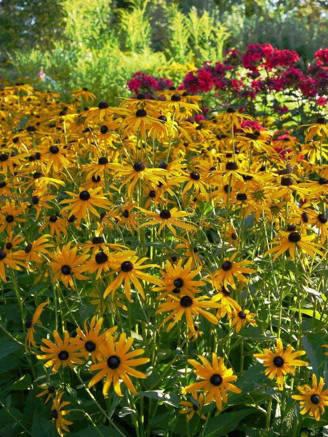 Verano: frontera amarilla iluminada por el sol del jardín de flores fotografía de archivo