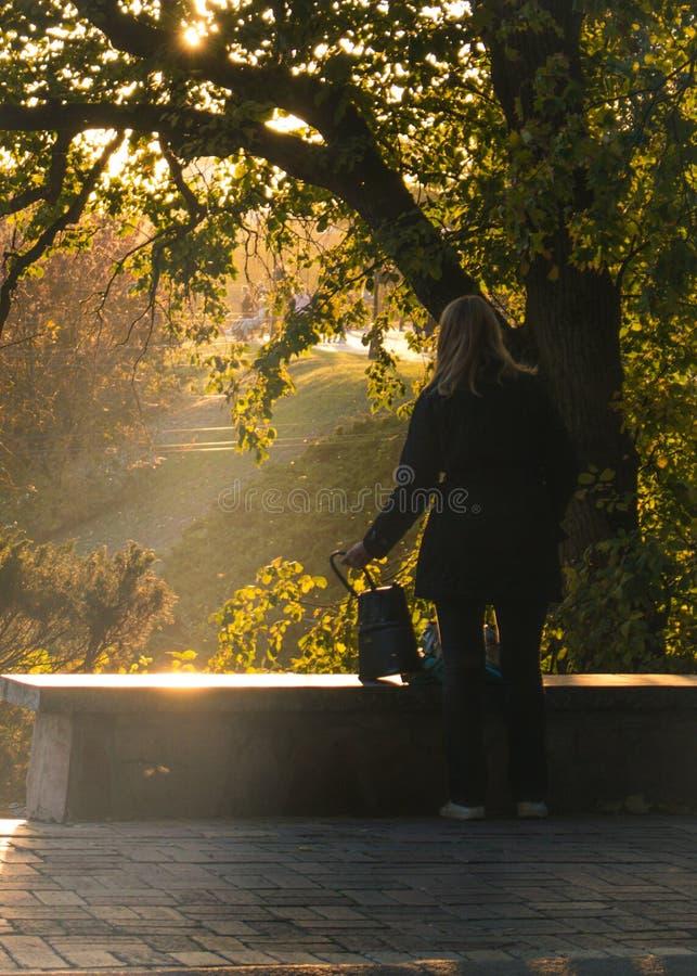 Verano o parque temprano del otoño en la puesta del sol foto de archivo