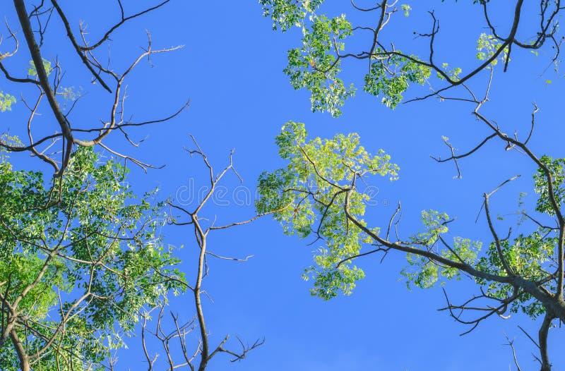Verano Sun de la primavera que brilla a través del toldo de árboles altos fotografía de archivo libre de regalías