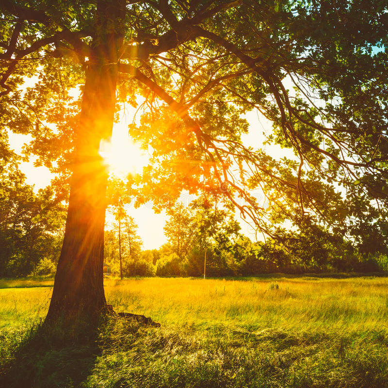 Verano Sunny Forest Trees And Green Grass Naturaleza fotografía de archivo