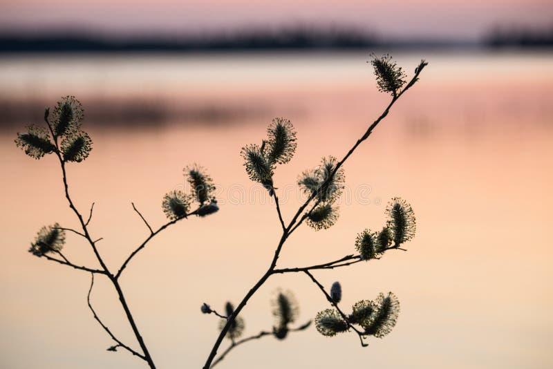 Verba bei Sonnenuntergang stockbild