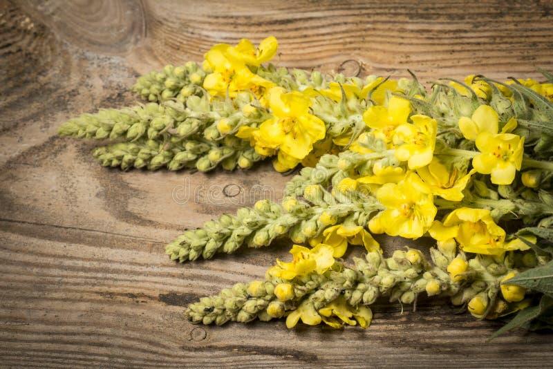 Verbascumdensiflorum - mullein bloem stock afbeelding