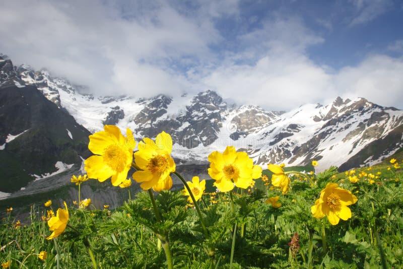 Verbazend berglandschap met gele bloemen op voorgrond op duidelijke de zomerdag in Svaneti-gebied van Georgië stock afbeeldingen