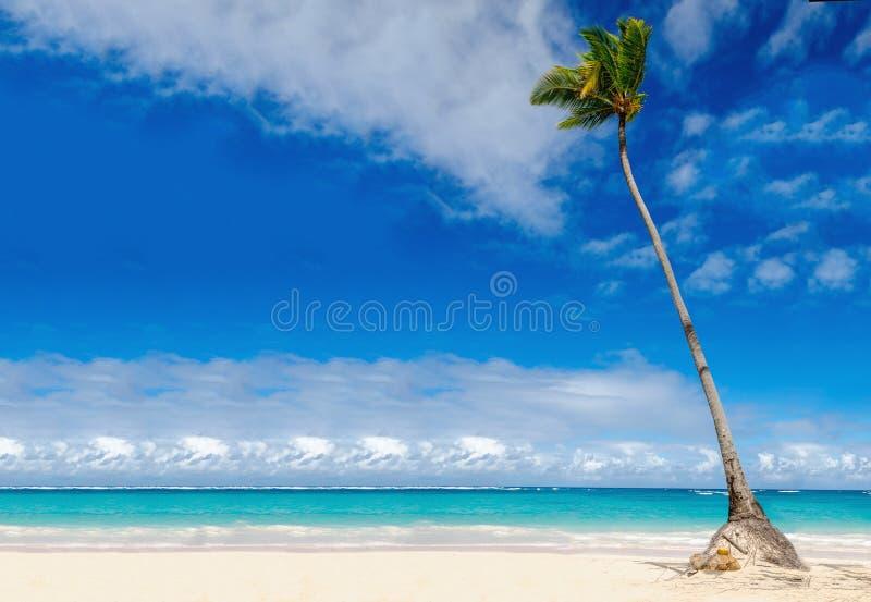 Verbazend exotisch strand met palm, Dominicaanse Republiek, Caraïbische Eilanden royalty-vrije stock afbeeldingen