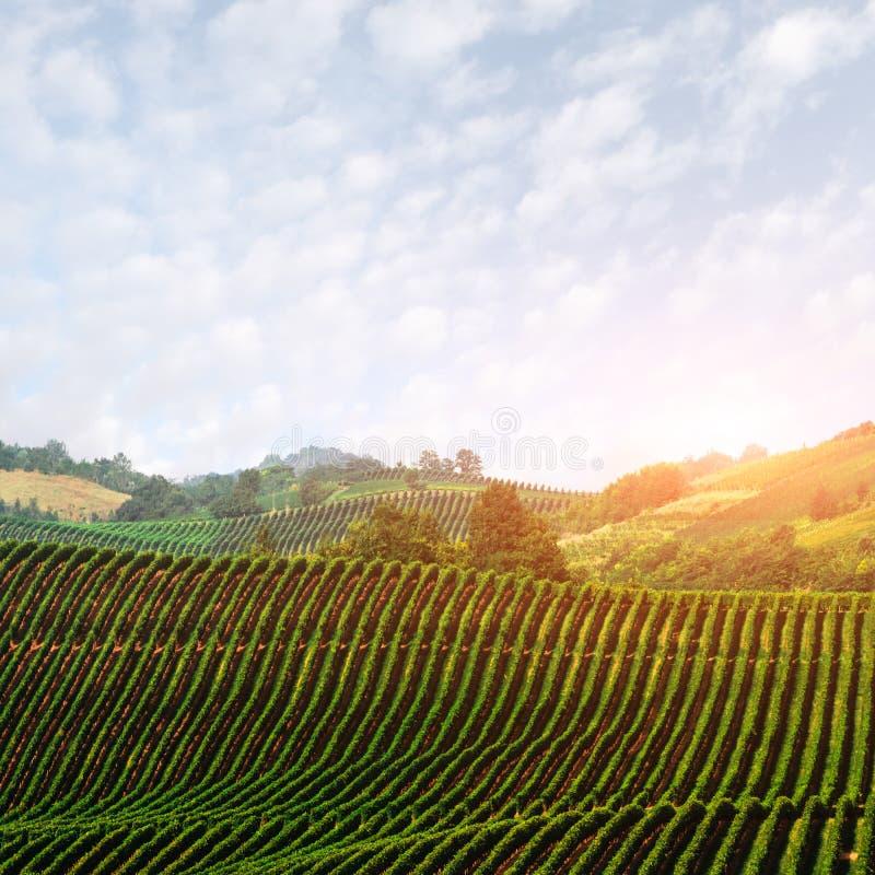 Verbazend landelijk landschap met groene wijngaard royalty-vrije stock afbeeldingen
