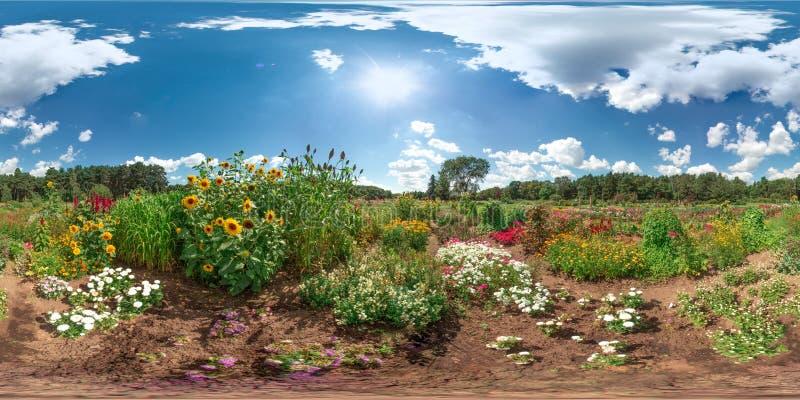 Verbazend landschap met het blauwe van de de wolkenzon van hemel kleurrijke bloemen witte van de het graszomer 3D sferische panor stock fotografie