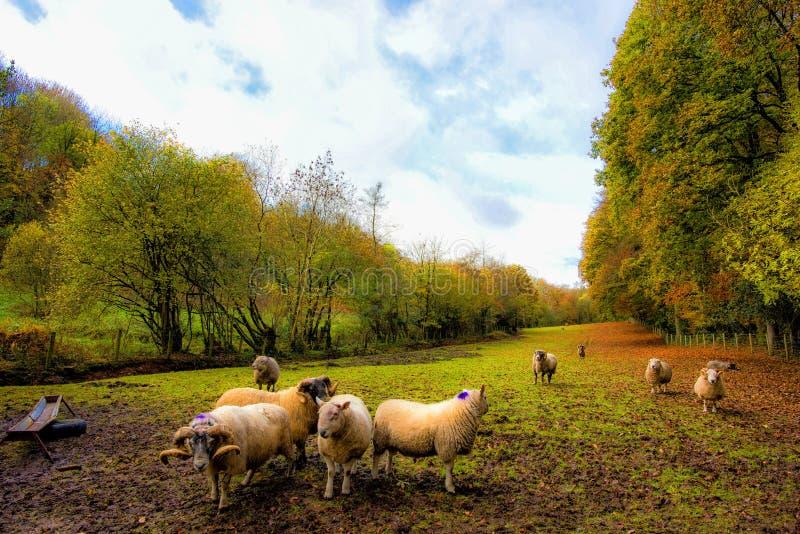 Verbazend landschap van de herfst royalty-vrije stock afbeeldingen