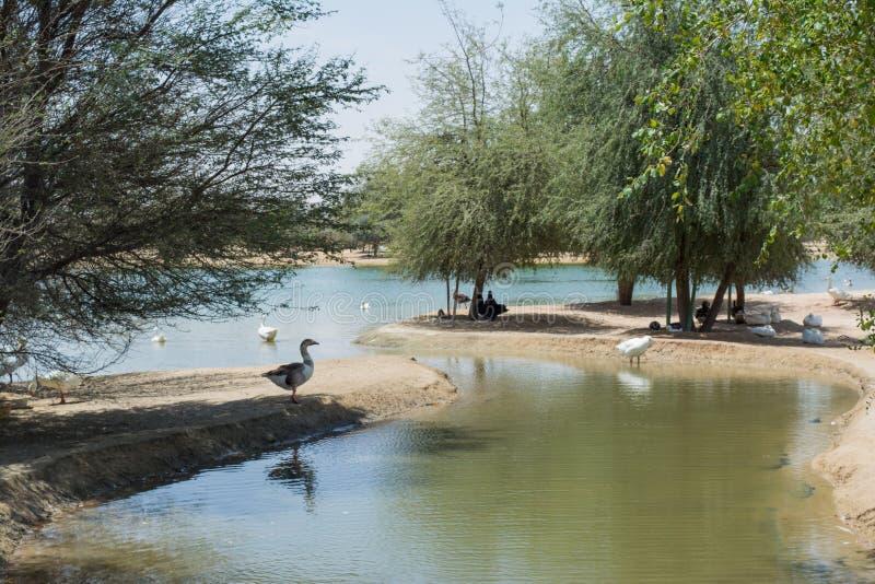 Verbazend mooi kunstmatig die meer in de woestijn door bomen wordt omringd royalty-vrije stock fotografie