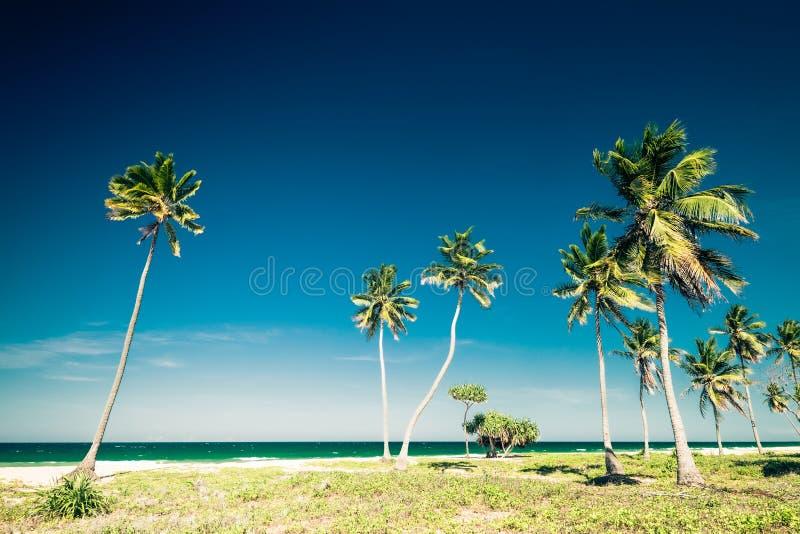 Verbazend tropisch strandlandschap met palmen stock foto's
