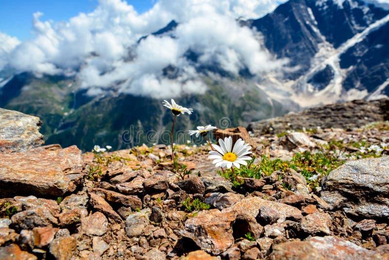 Verbazende aardmening van het groene van de bergbos en boom groeien op een rots, natuurlijk landschapsperspectief, de Kaukasus, R stock foto's