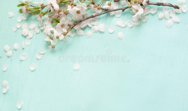 Verbazende achtergrond met witte kersenbloesems stock afbeeldingen
